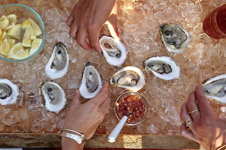 marthas vineyard oyster fest