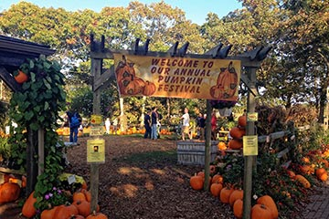 pumpkin festival Edgartown Morning Glory farm
